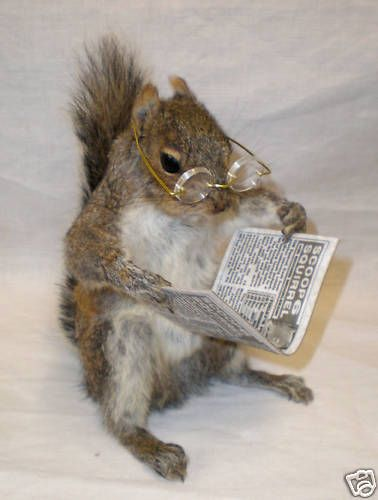 Well this is a monocle-popper of a New York Times review section this week, I tell you. #squirrels