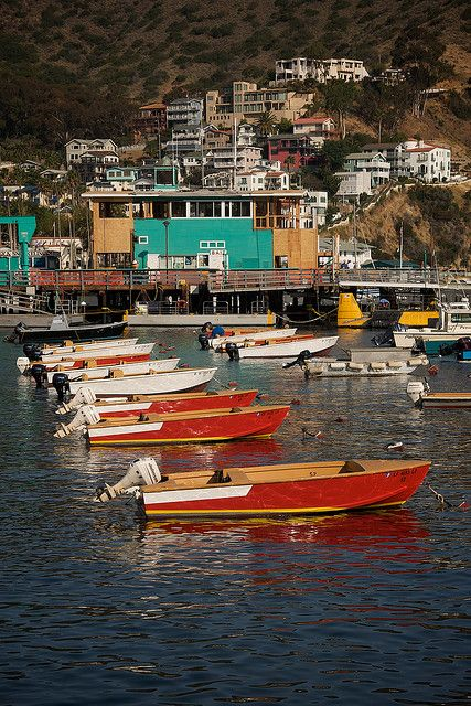 the boats of avalon in 2019   Places I have been   Avalon