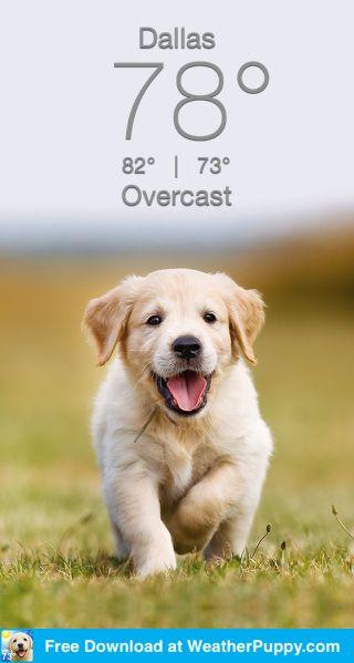 Free Weatherpuppy Com Labrador Retriever Golden Retriever Retriever