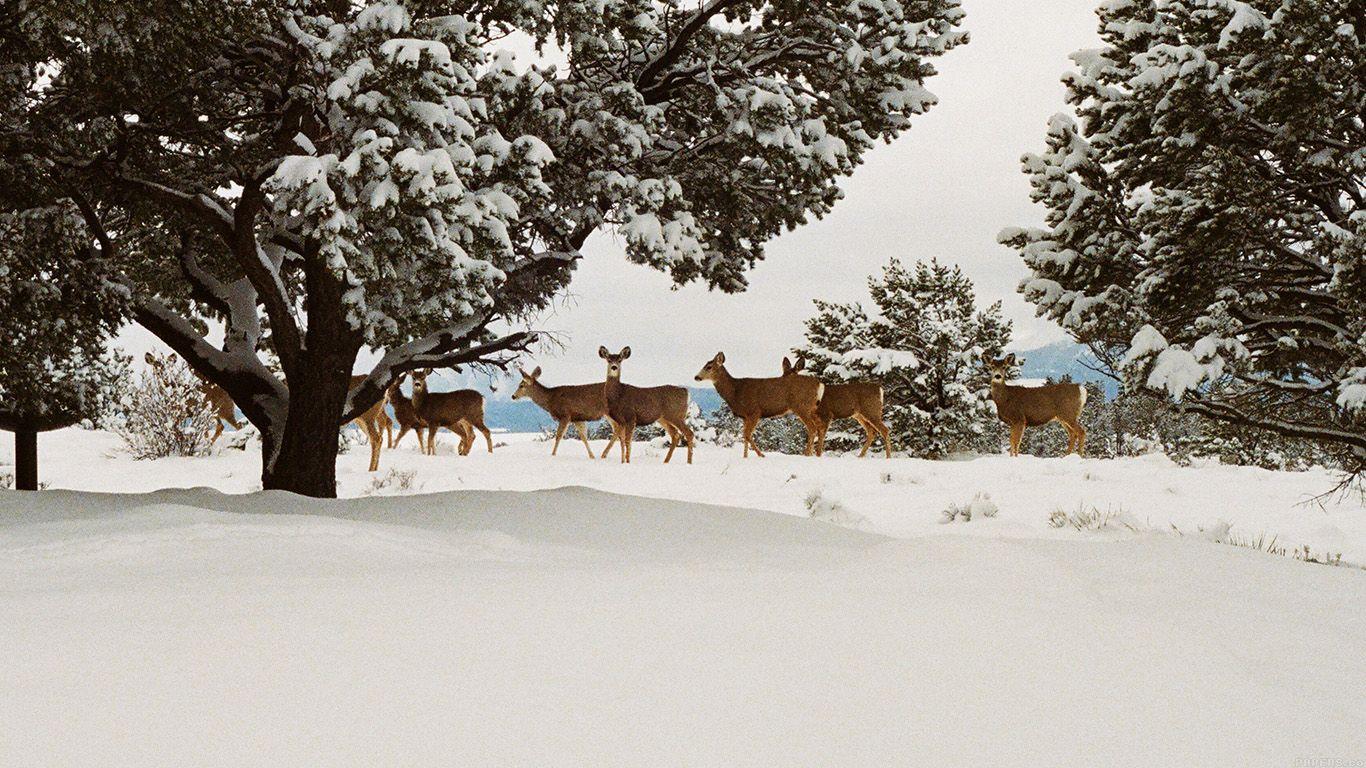 Mj27 Snow Deer Winter Nature Animals Winter Wallpaper Desktop Winter Nature Animal Wallpaper