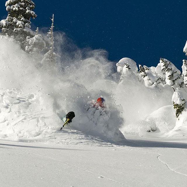 Dan Withey with your Saturday submersion courtesy of @leecohen_pics . #pitted #pow #skialta