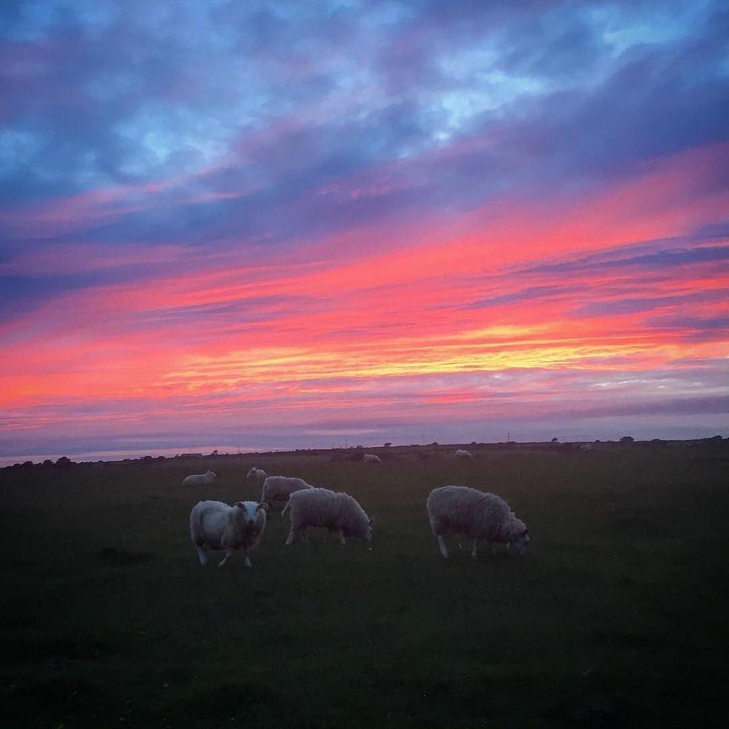 "Coombe Mill (Fiona) en Twitter: ""Amazing skies over Bodmin Moor tonight #bodminmoor #sunset #sky #cornwall #sheep #moor #m… https://t.co/ZOmcB7KGZt https://t.co/MiABFtGwvW"""