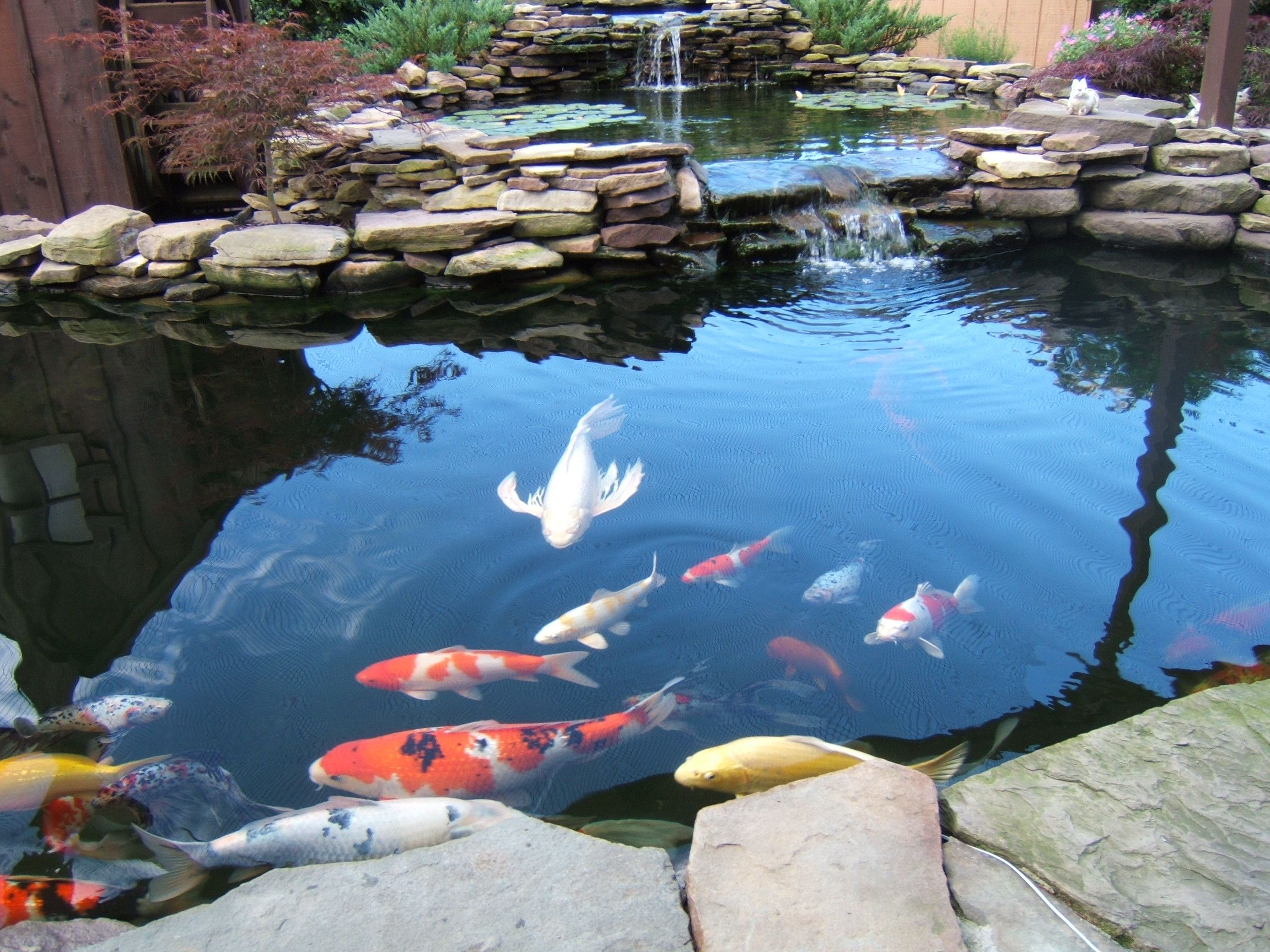 9 awesome diy koi pond and waterfall ideas for your back yard hit diy crafts [ 2304 x 1728 Pixel ]