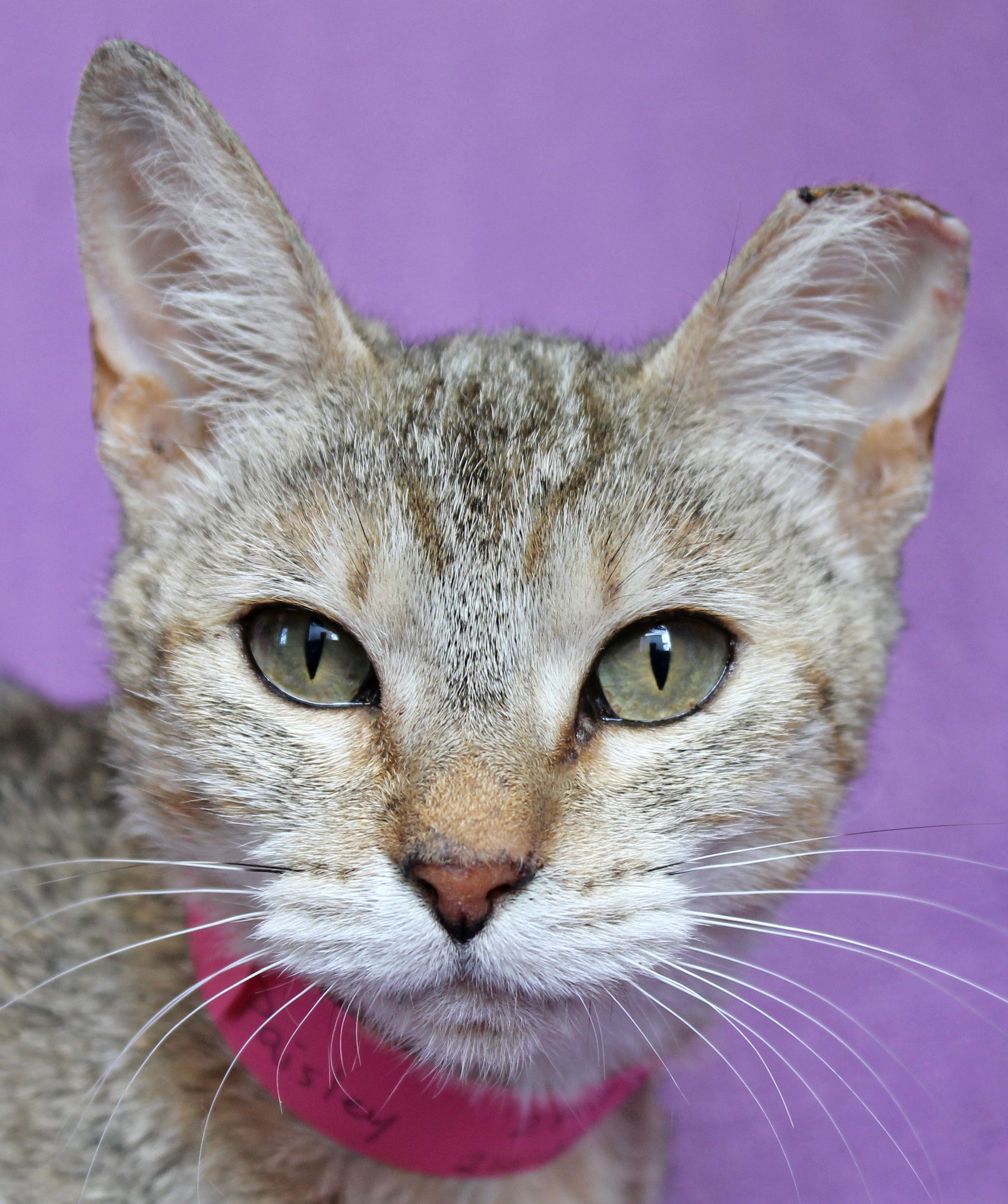 Paisley See More Dogs Cats On Www Sahumane Org Follow Us On