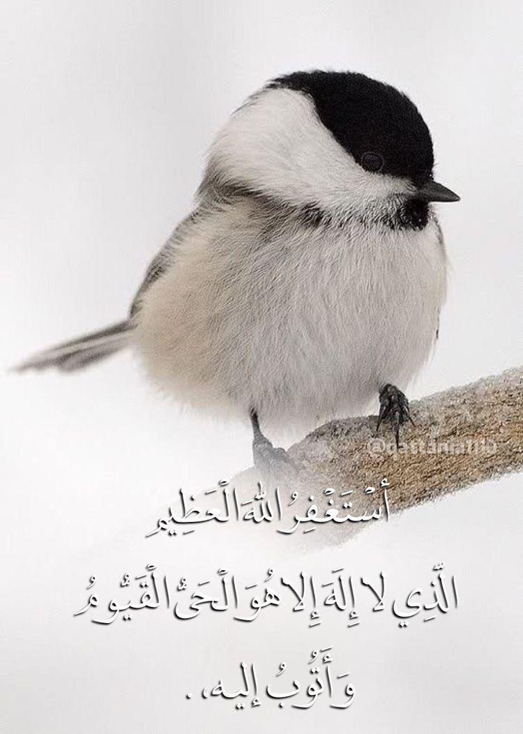 DesertRose,;,أستغفر الله العظيم وأتوب إليه,;,