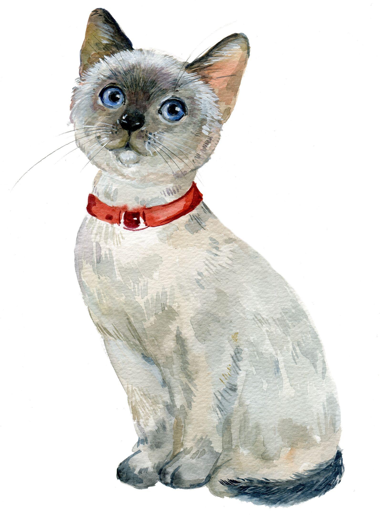 Pin van Светлана op Коты