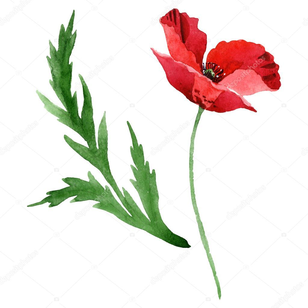 Red Poppy Flower Green Leaf Isolated White Watercolor Background Illustration St Ad Green Leaf Flower Red A Aquarell Hintergrund Mohn Rot Mohnblume