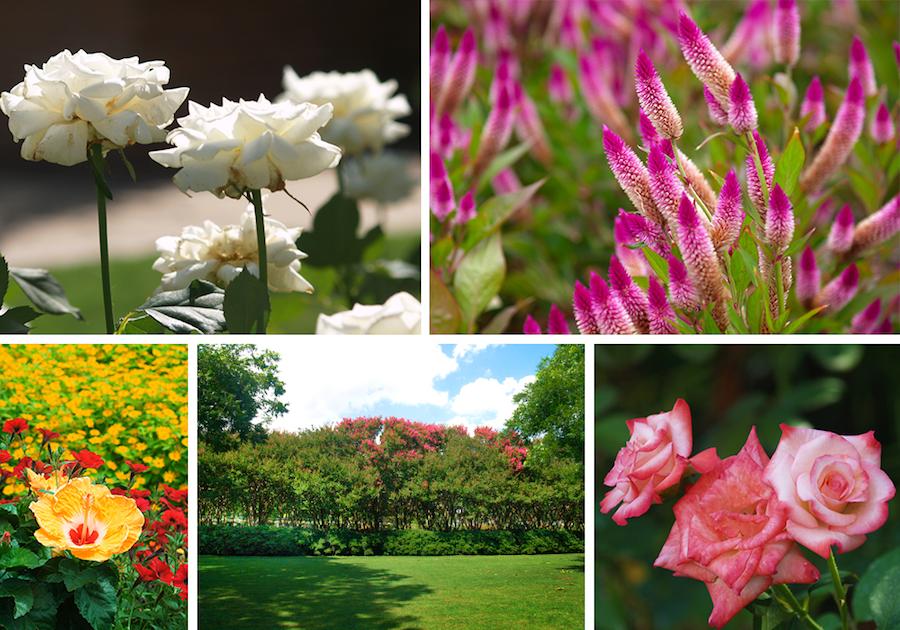 June 20, What's in Bloom, Garden, Arboretum, The Dallas Arboretum, Flowers