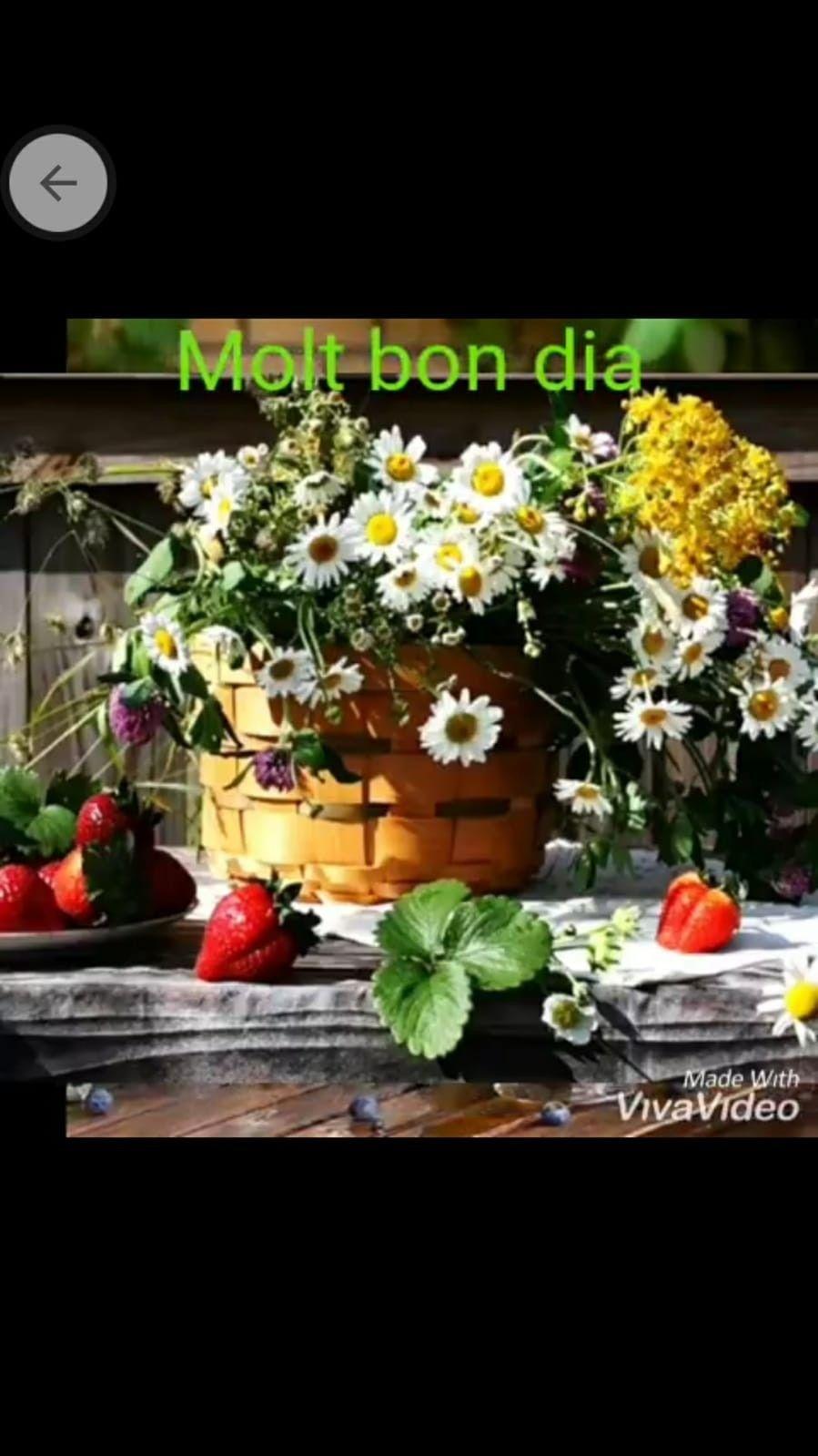 Pin De Maite Cano En Bon Dia Buenos Dias Feliz Dia Saludos De Buenas Noches Frases De Buenos Días