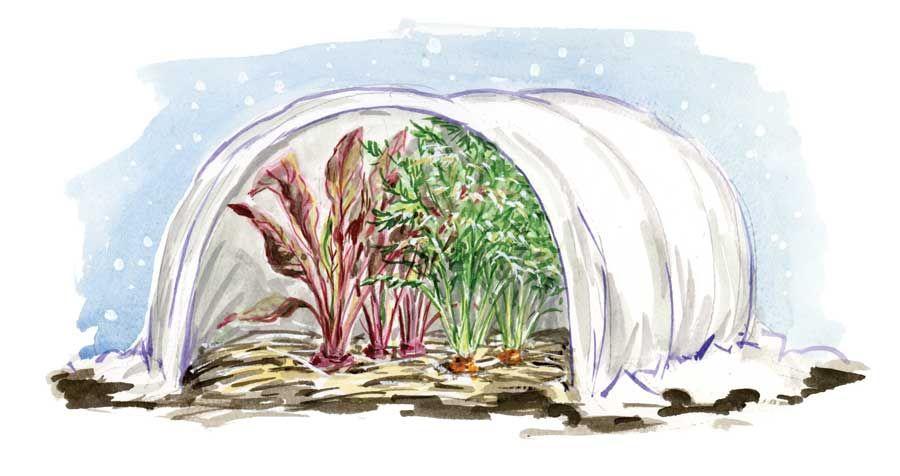 Self seeding biennial crops...