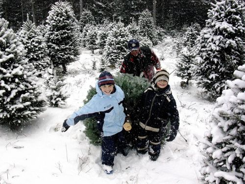 Christmas Tree Emmanuelle Philippe And Daniel Pulling Trees In The Snow Christmas Tree 9 Christmas Tree With Snow Christmas Tree Farm Tree Farms
