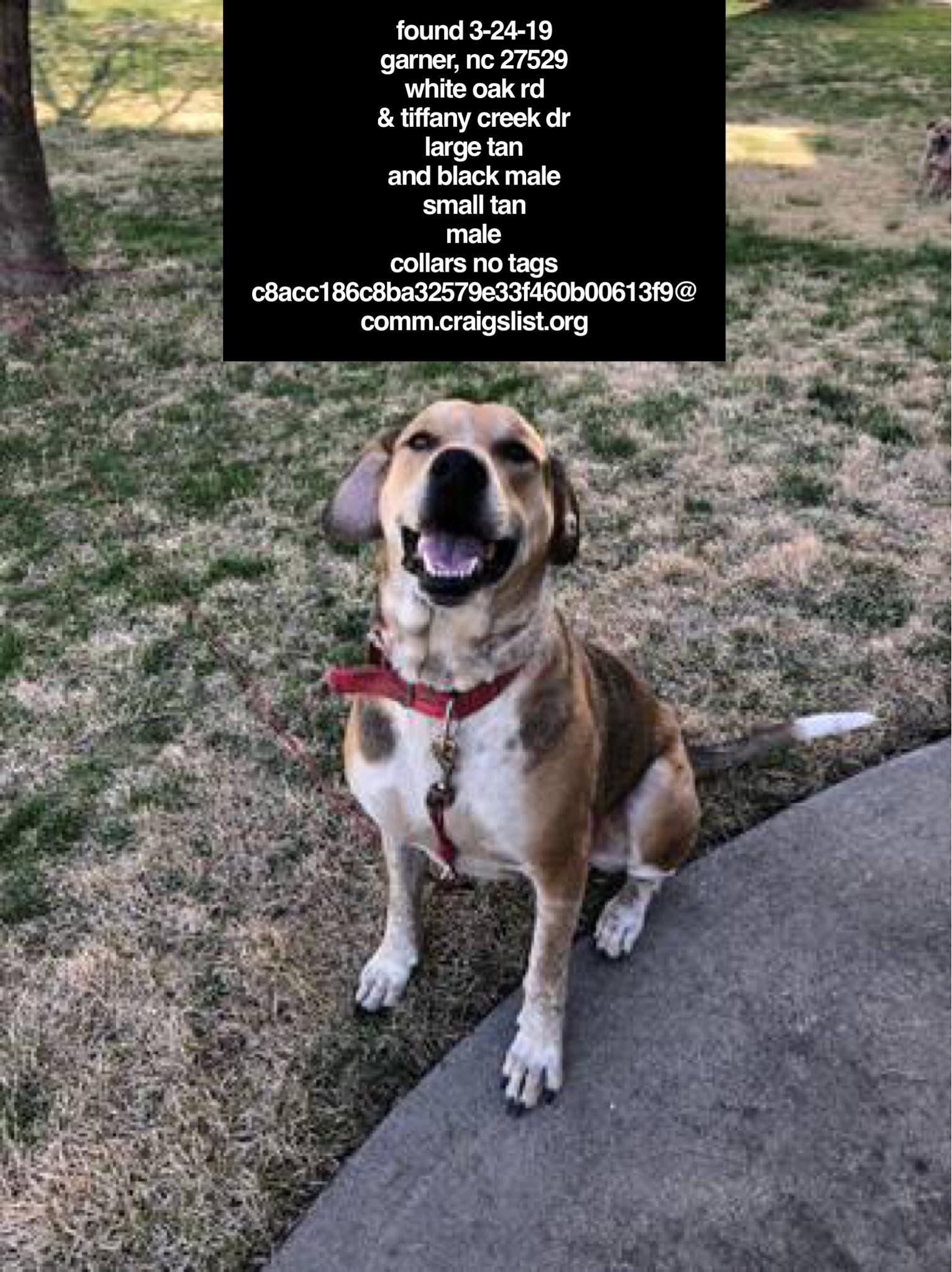FOUNDdog 3-24-19 #Garner, #NC 27529 White Oak Rd & Tiffany