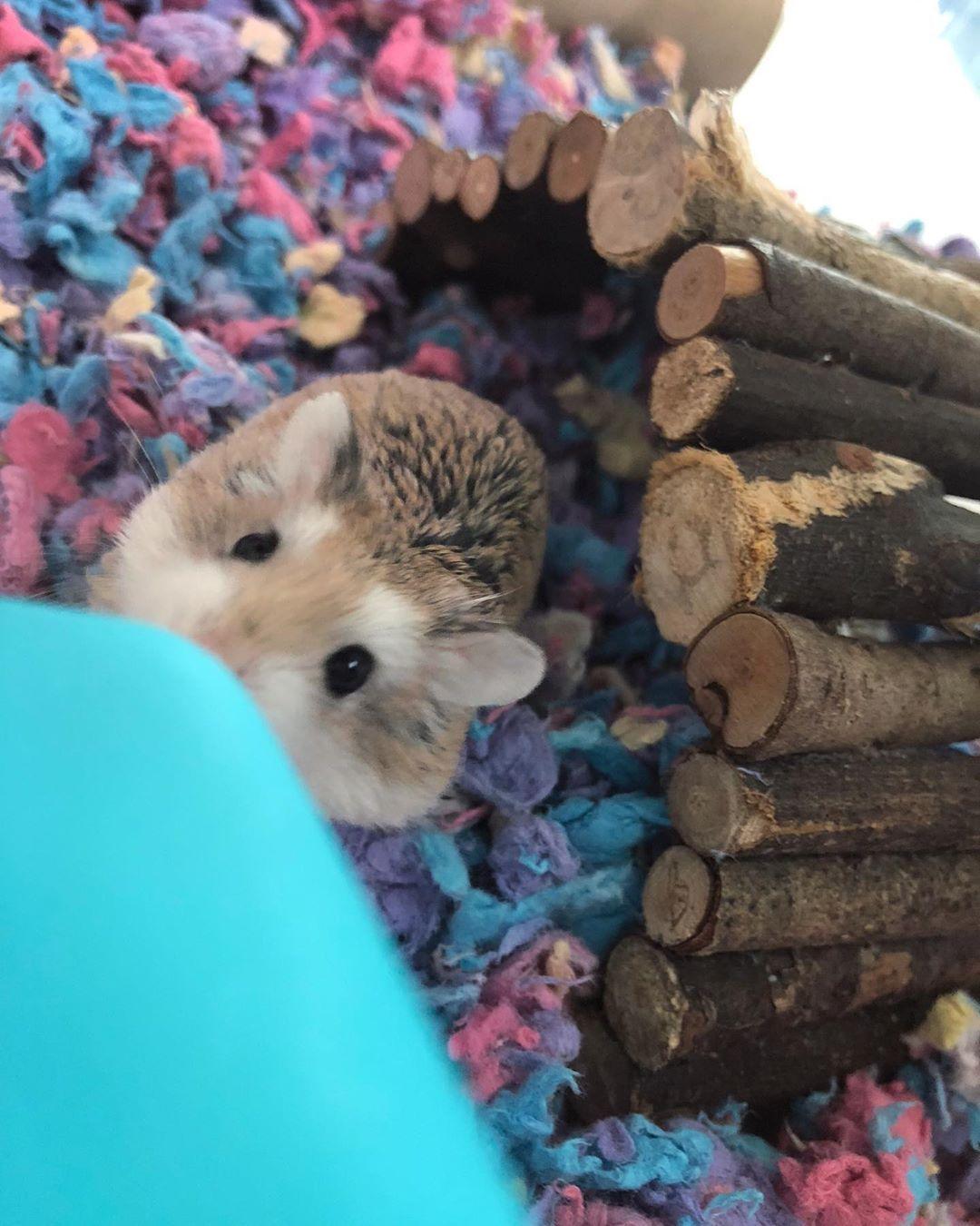 Bbw hamster movies