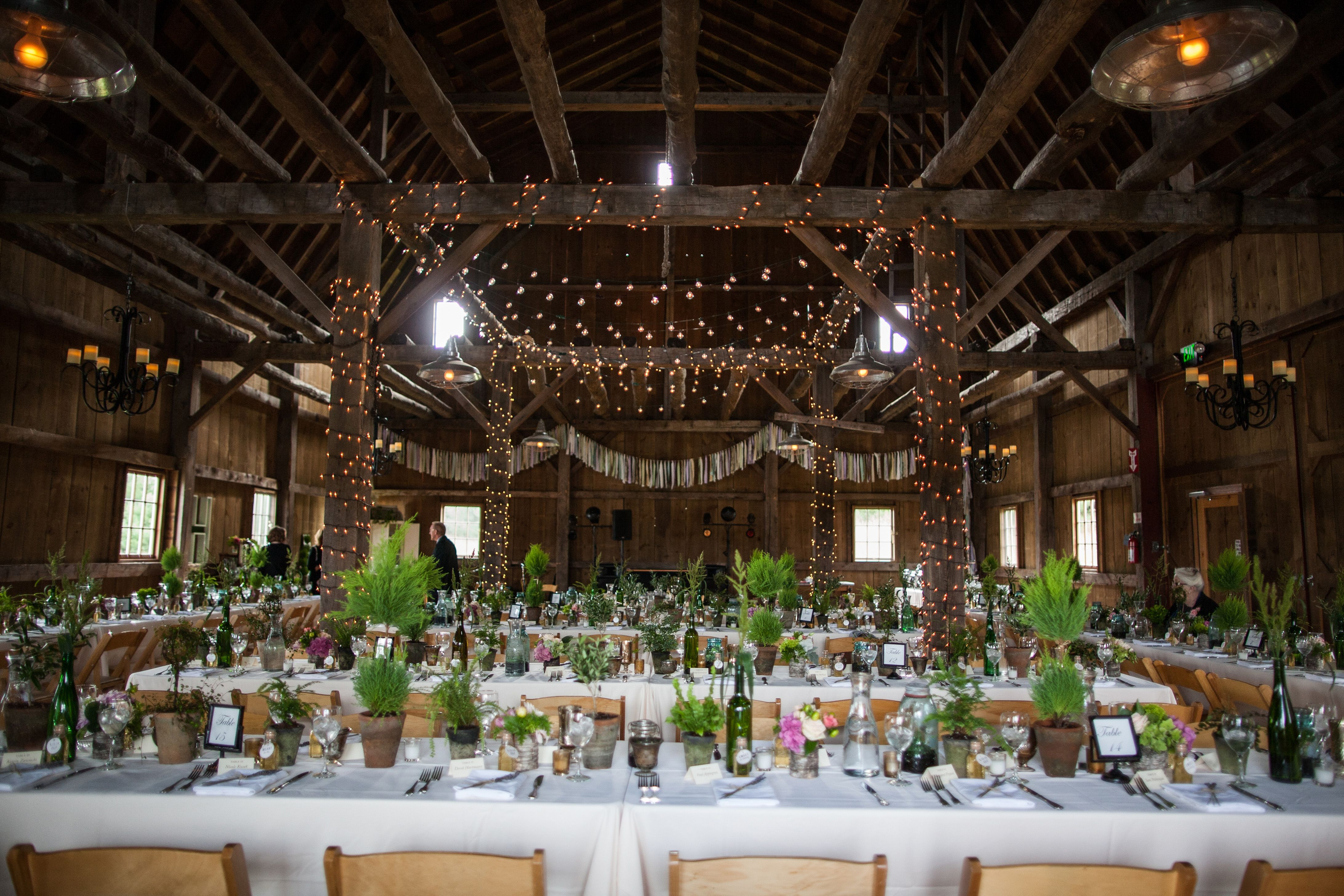 Rustic Green Succulent And String Light Reception At Garvey Family