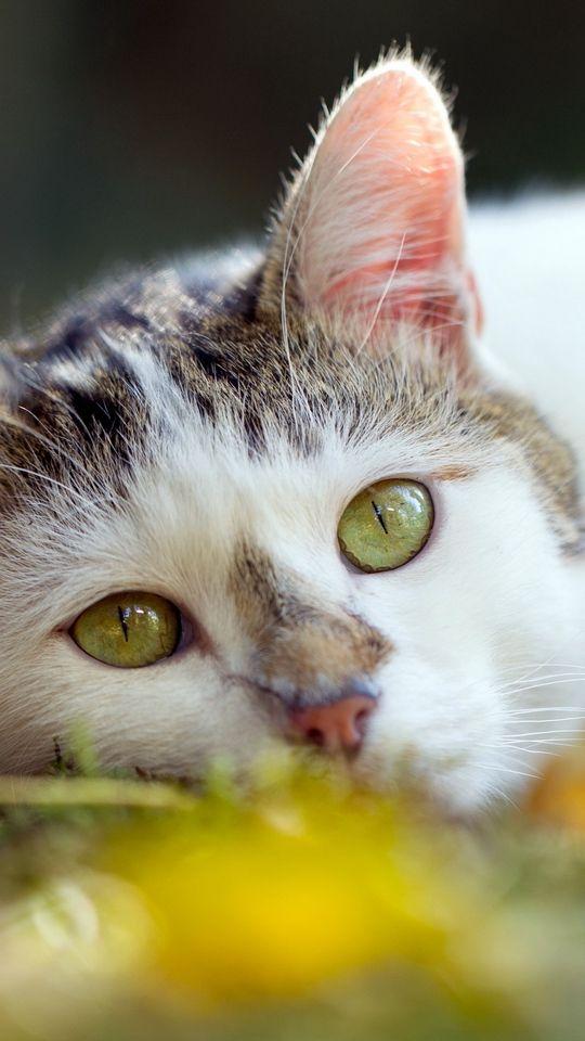 Пин на доске коты и кошки няшки