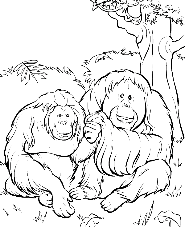 two orangutans in the jungle coloring pages animal