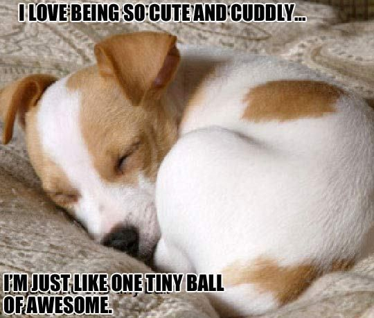 I Love Being So Cute And Cuddly…