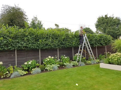 Photo of #pleached hashtag on twitter – garden design ideas
