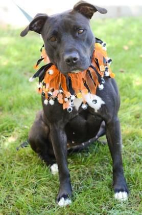 Profile With Images Dogs Humane Society Find Pets