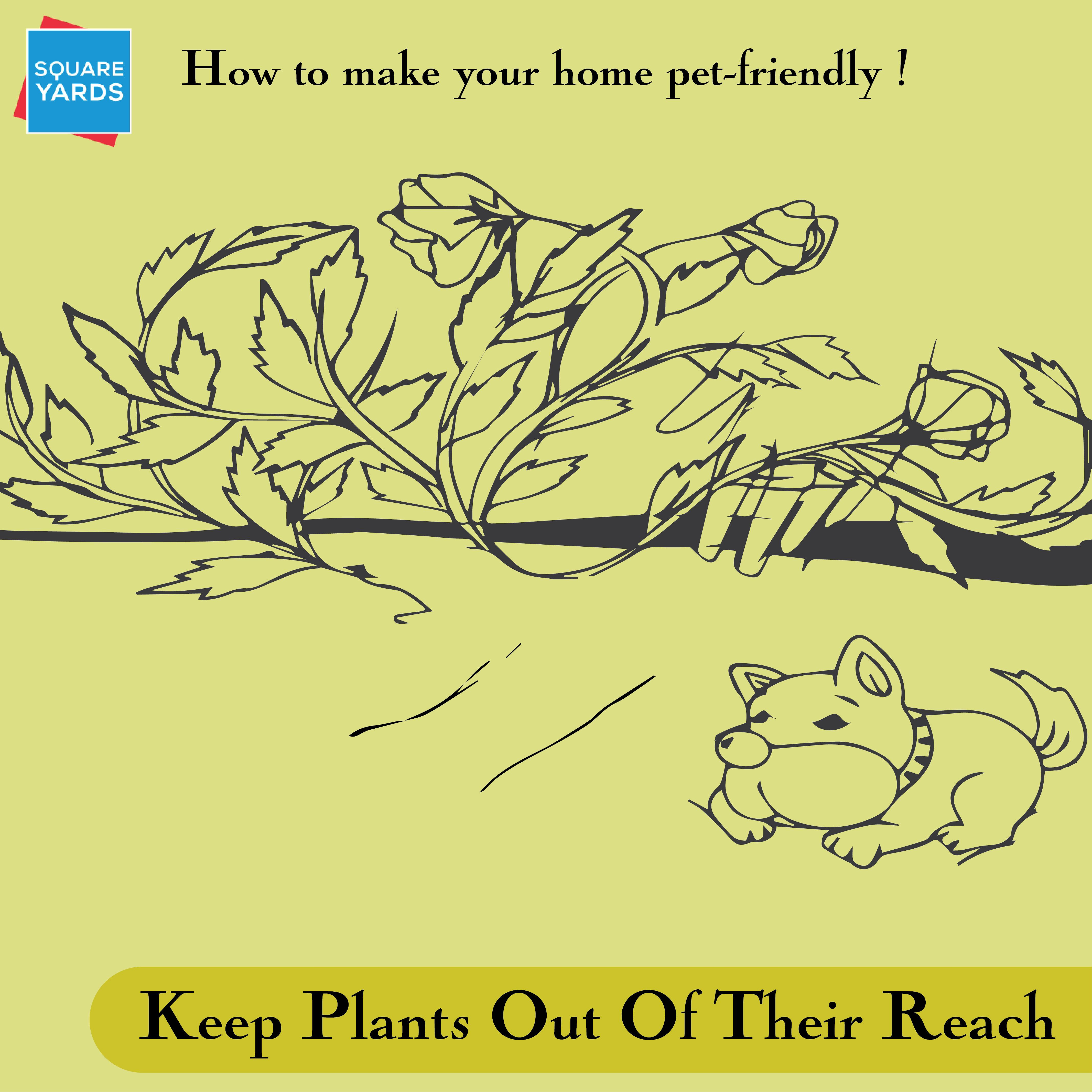 Most Common Household Plants Are Poisonous To Dogs Hence, Keep