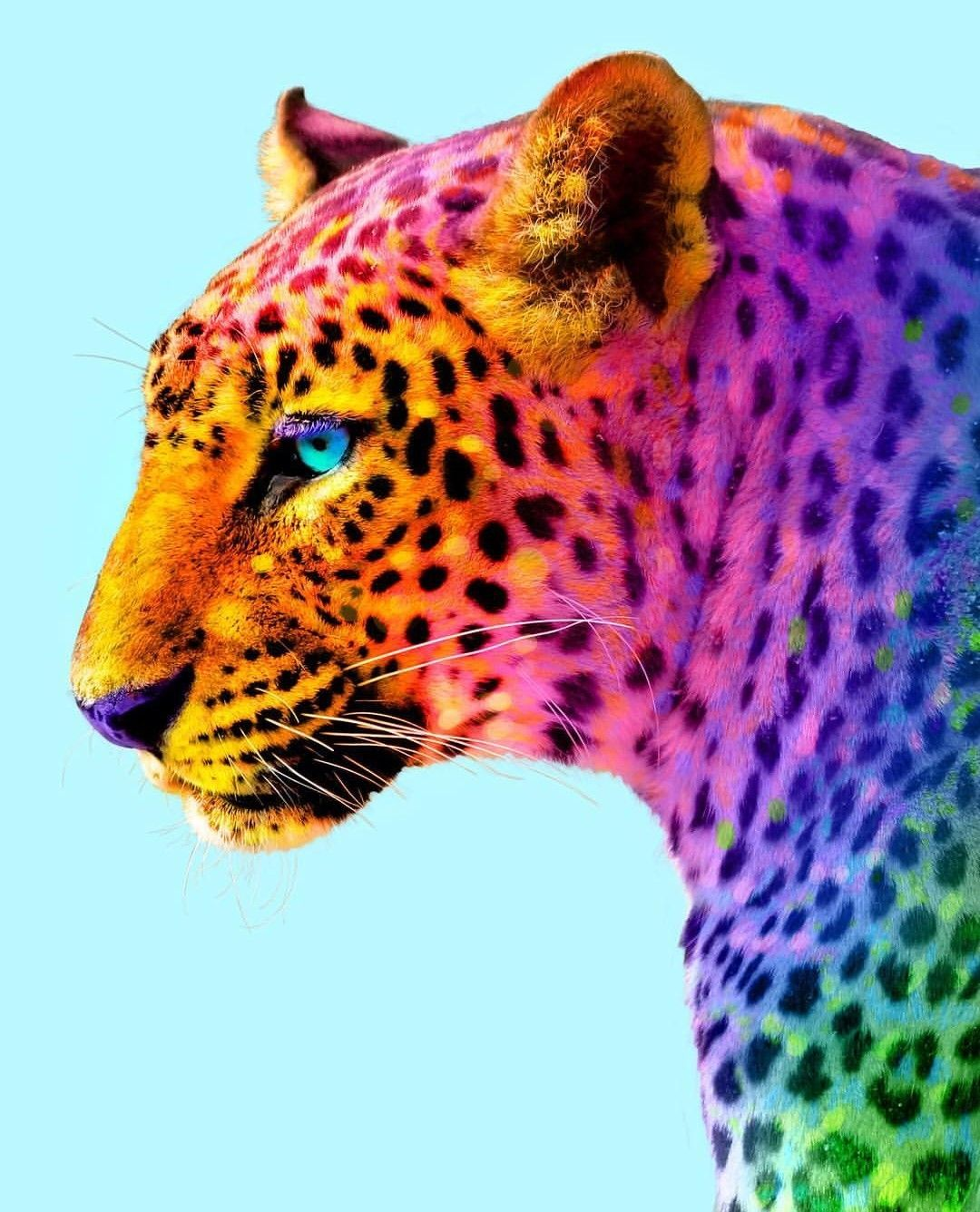 Pin By Nam Hughes On Rainbow With Images Colorful Animals