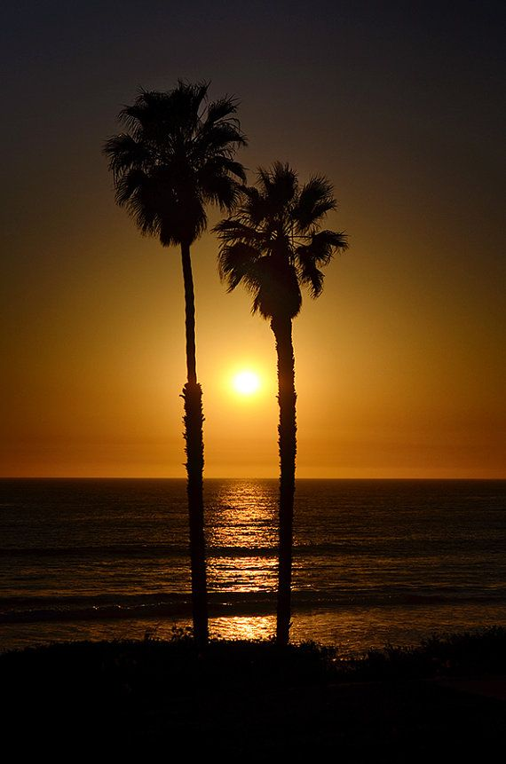 Landscape Photography Palm Tree Sunset Silhouette By Asqewcreative Tree Sunset Wallpaper Palm Tree Sunset Sunset Wallpaper
