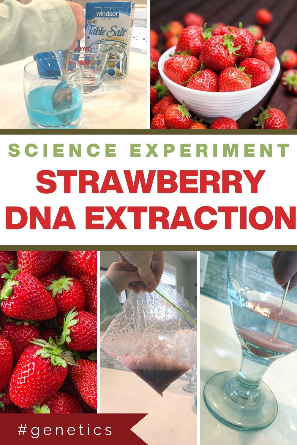 Simple Strawberry DNA Extraction Science Experiment   Dna ...