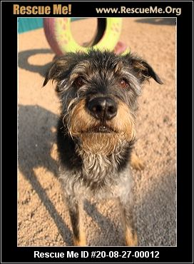 Arizona Small Dog Rescue Phoenix, AZ AVAILABLE PETS