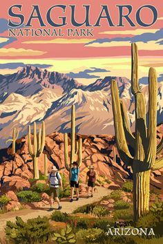 Resultado de imagem para saguaro national park