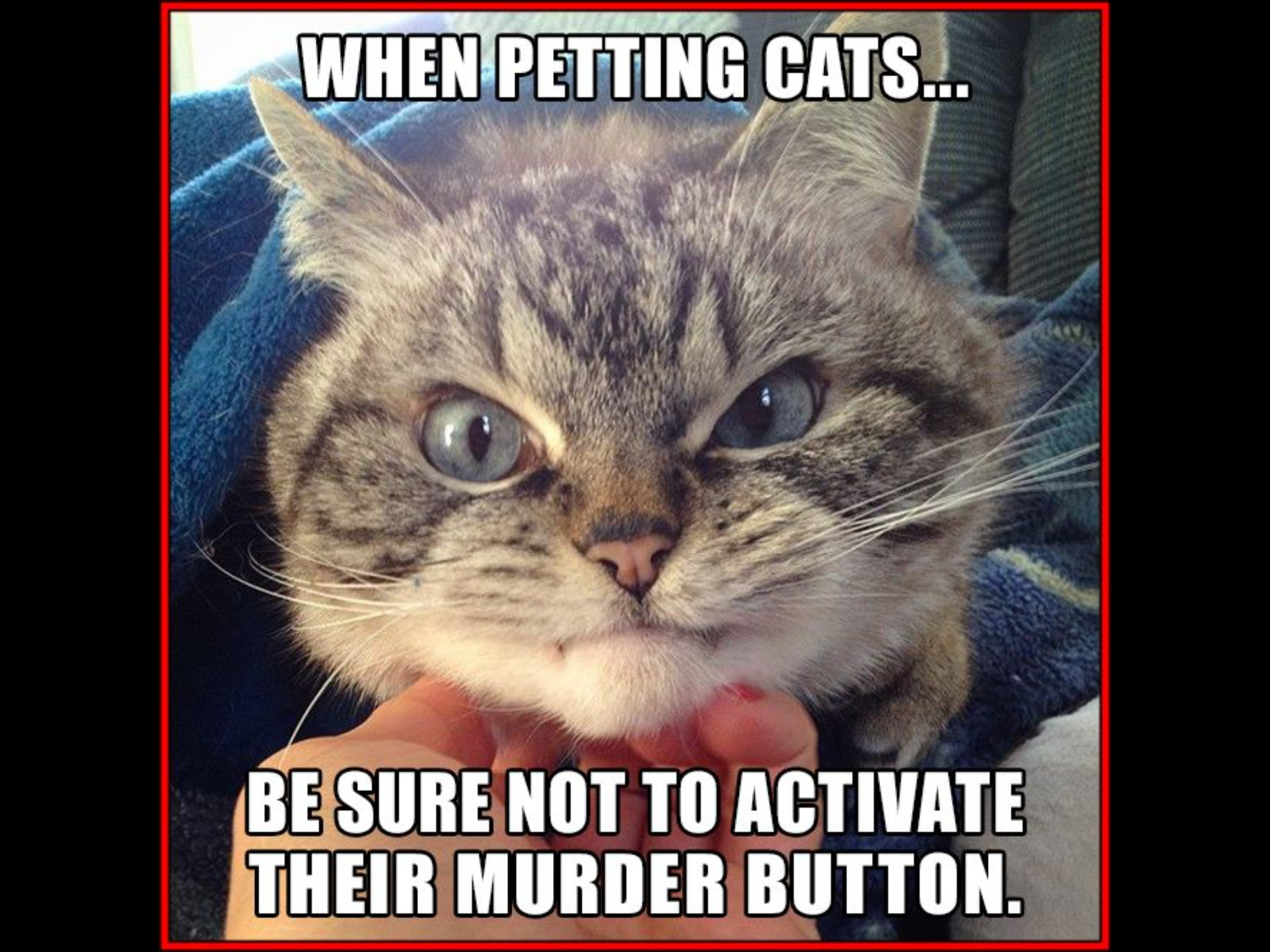 Pin on cats Pinterest