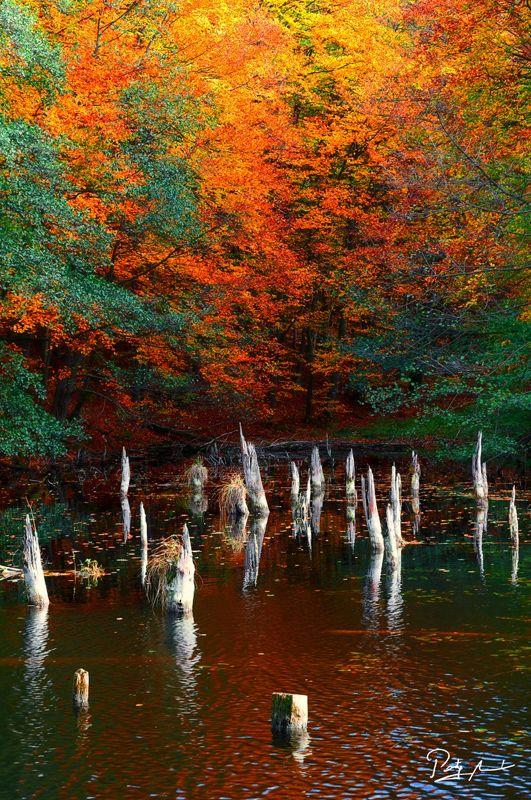 Murderous lake by István Ponty, via 500px