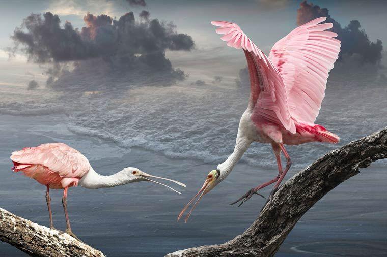 Cheryl-Medow-bird-photography-10