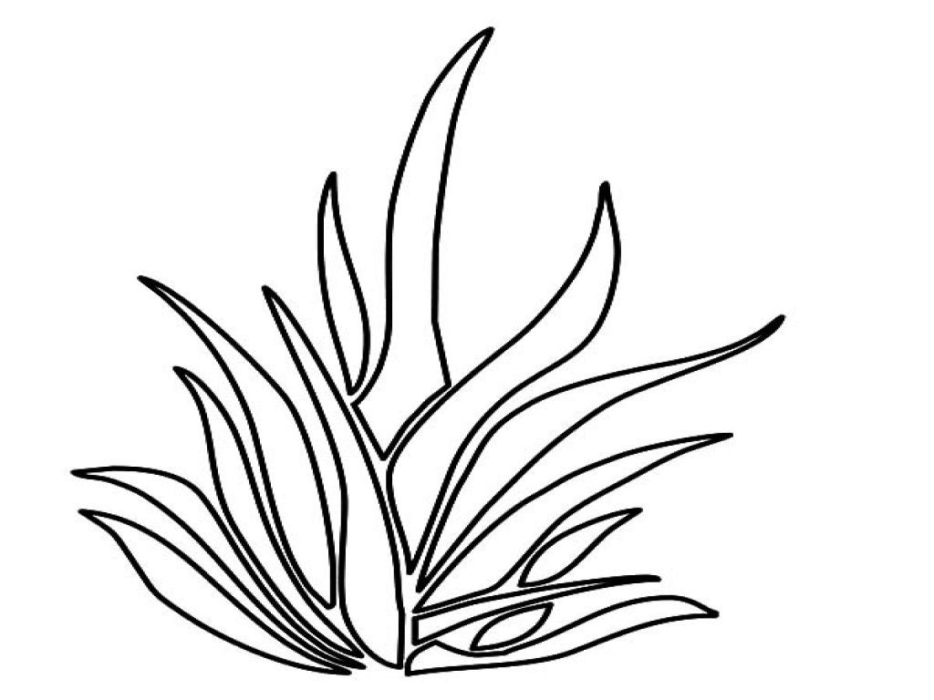 Pin By Honestly 13 On Coloring Book Coloring Pages For Kids Coloring Pages Tree Outline