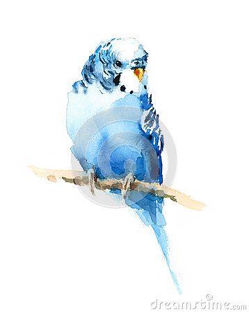 Illustration Exotique D Oiseau De Perruche D Aquarelle Bleue De