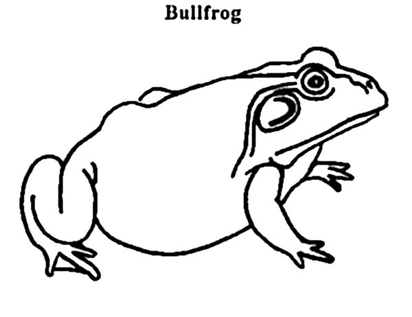 Pin By Laura Mcfillin On Ecosystems Coloring Pages Bullfrog Online Coloring