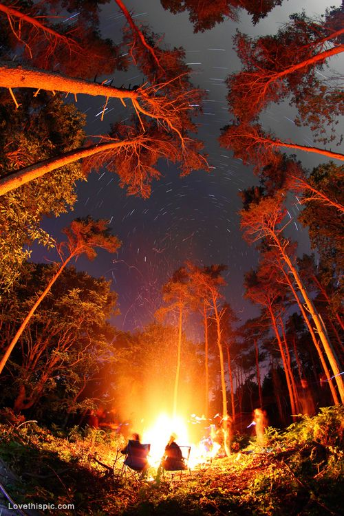 A Campfire Illuminating The Night Sky In Forest Amongst Tall Trees That Point To Stars Wonderful Camping Spot And Photography
