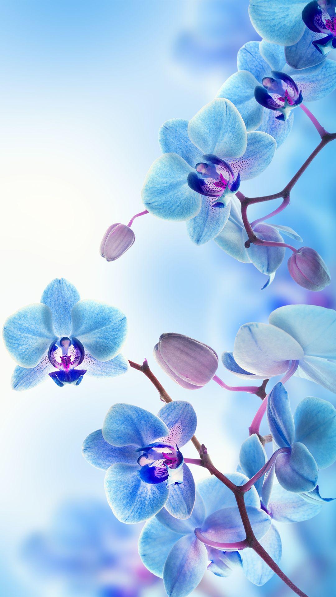 Wallpaper Pentru Iphone Ipod Si Ipad 04 07 2016 Idevice Ro Ipad Wallpaper Watercolor Orchid Wallpaper Blue Flower Wallpaper Fantastic orchid flower wallpaper