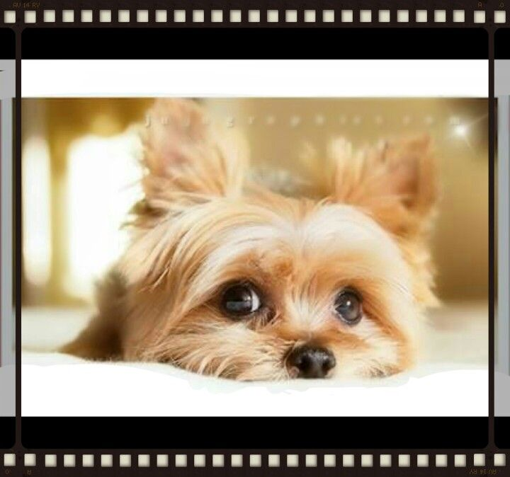 Precious trouble* Puppies, Cute animals, Pets