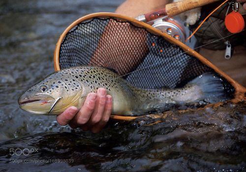Best Fishing Line by timothylaurijssen  IFTTT 500px