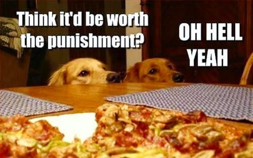 Stealing Food Is Worth Punishment Dog Logic Animal Captions Funny Animal Pictures