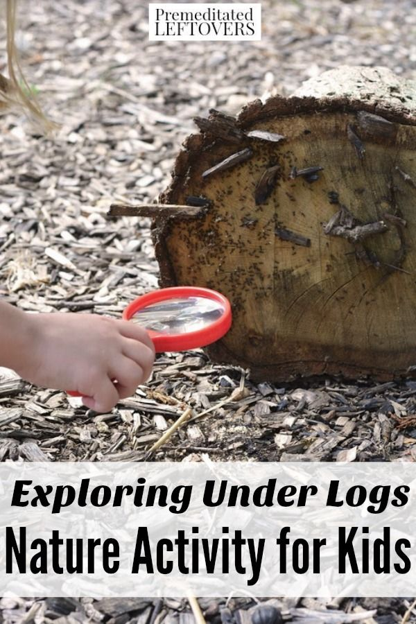 Kids can be detectives with this Exploring Under Logs Nature Activity. It's a fascinating way for them to take a closer look at insects and ecosystems. Easy nature study project or life science activity for multiple grade levels.