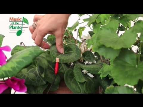 ▶ Even Plants Like to be Touched - YouTube