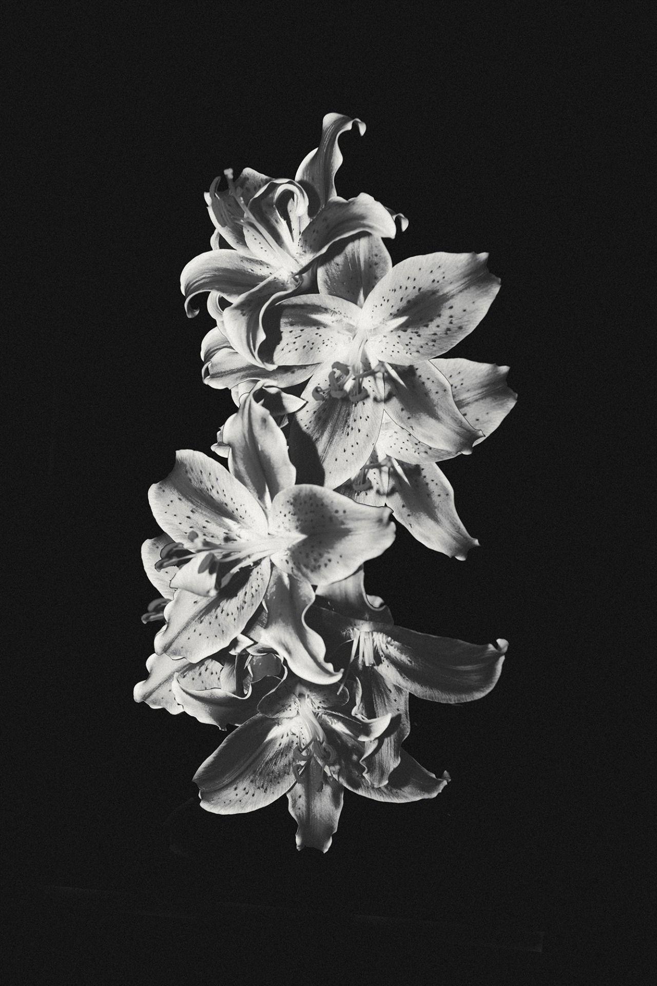 Flora Studies (2014) Kristin lee Moolman