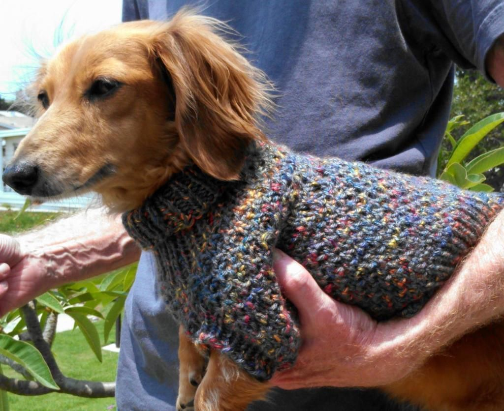 Cozy Brioche Miniature Dachshund Sweater