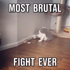 most brutal fight ever in cat history.