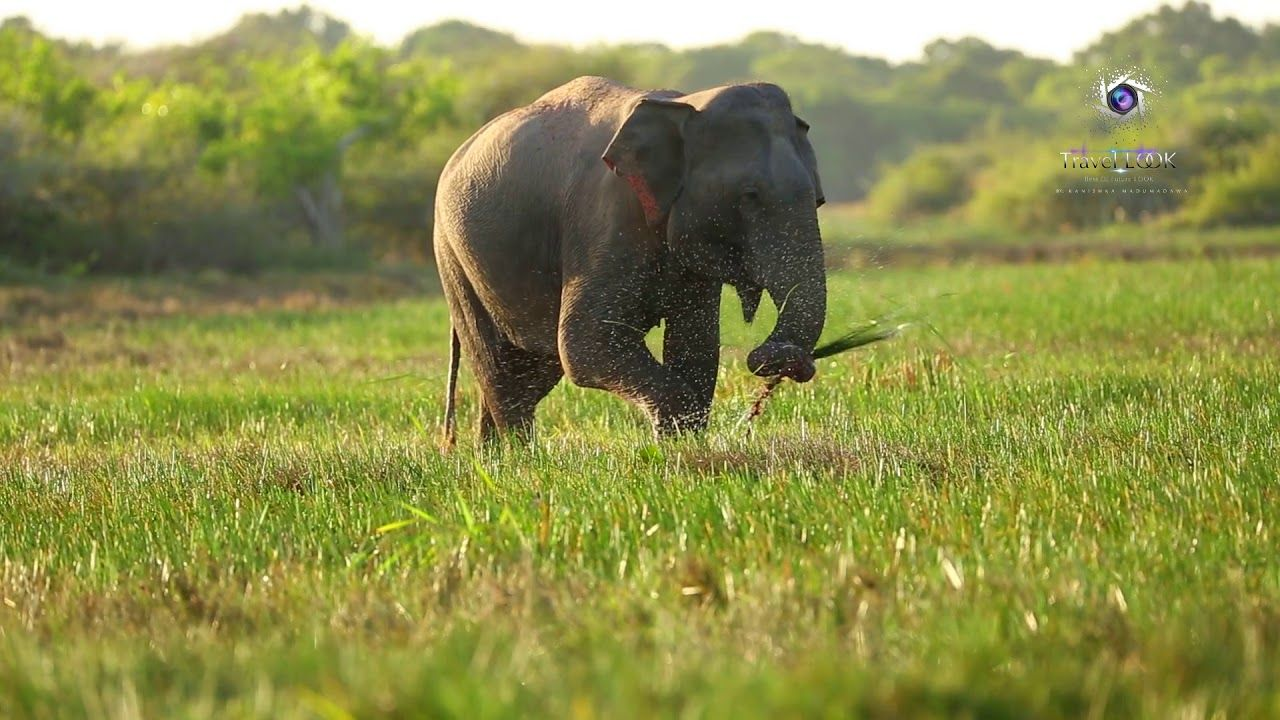 Kumana National Park in Sri Lanka | 2019 | Part 01 - YouTube