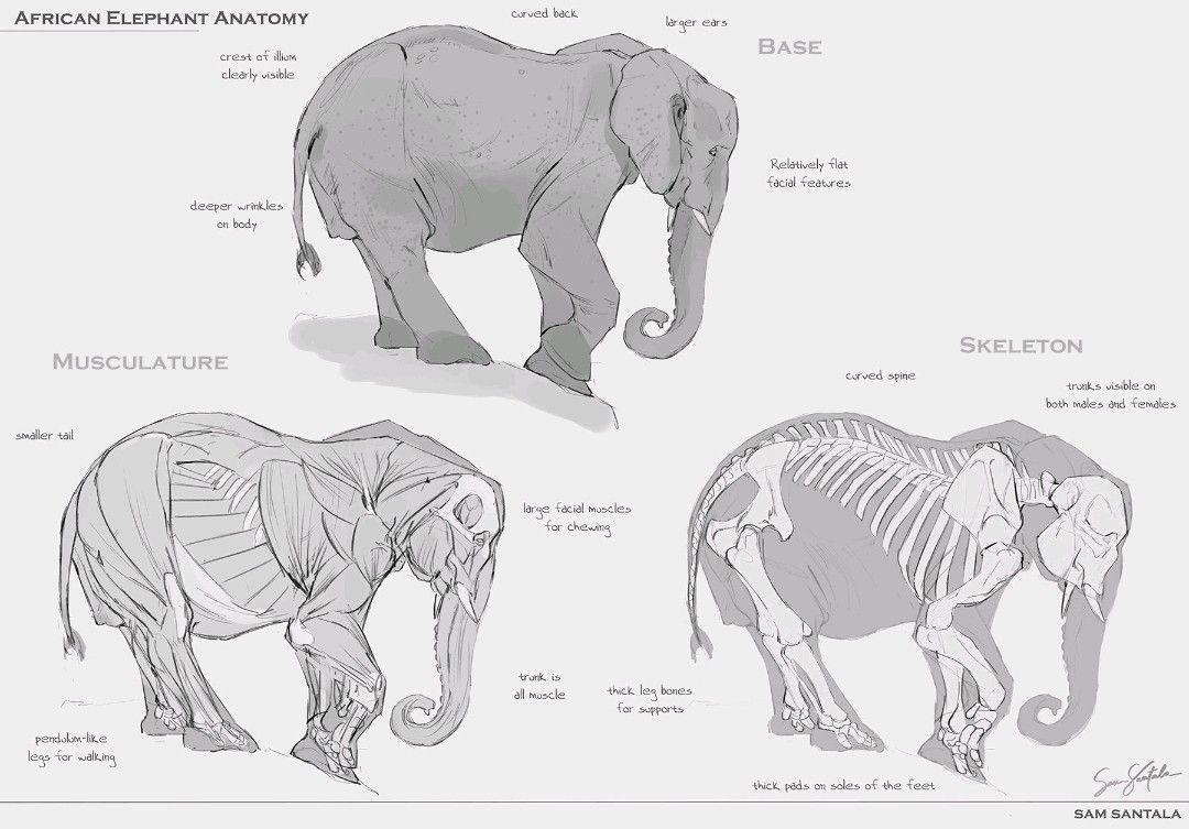 Luxury Female Elephant Anatomy Embellishment - Anatomy Ideas ...