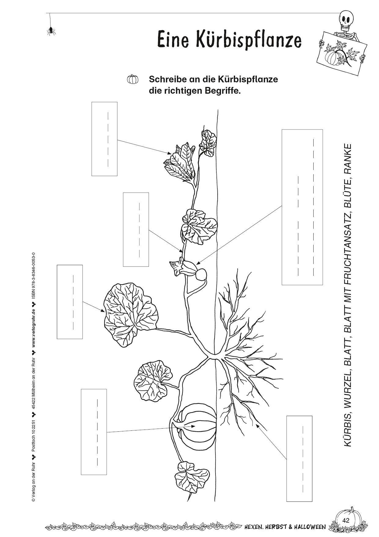 Kopiervorlage Eine Krbispflanze  Herbst Hexen