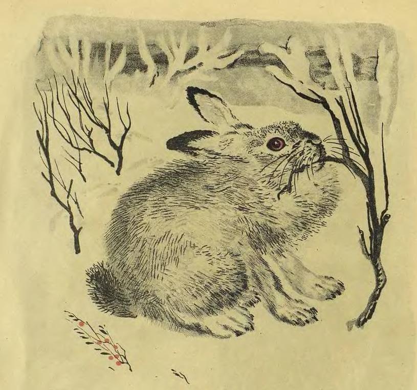 открытки чарушина аву