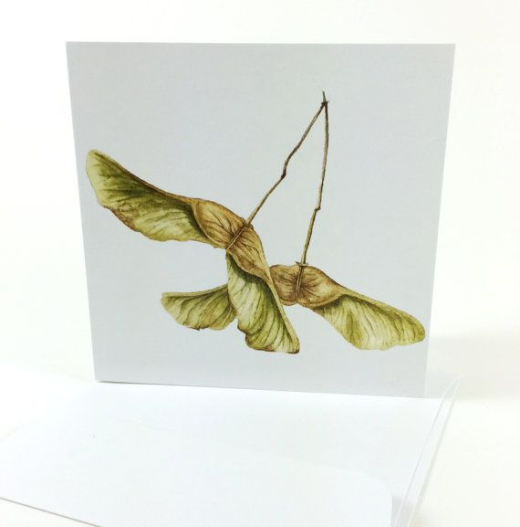 1 Watercolor Maple Seedpods Card  Watercolor by LauraAshtonArtist